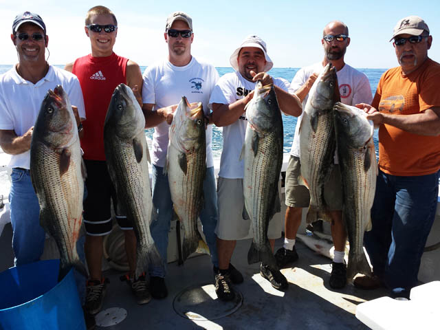 Fall striped bass run