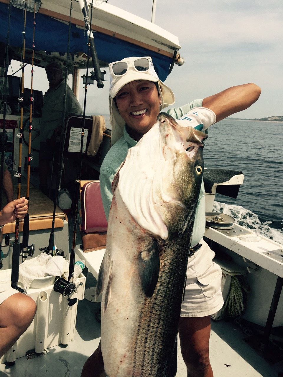 large striped bass